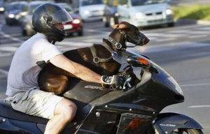 biking dog