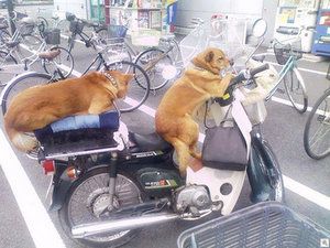 biking dogs